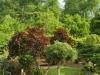japonska-zahrada4