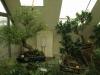 bonsaje-tropic-hukvaldy-11