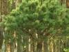 bonsaje-tropic-hukvaldy-12