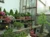 bonsaje-tropic-hukvaldy-13