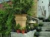 bonsaje-tropic-hukvaldy-14