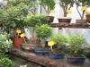 bonsaje-tropic-hukvaldy-17