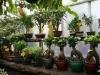 bonsaje-tropic-hukvaldy-18