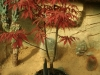 bonsaje-tropic-hukvaldy-2