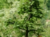 bonsaje-tropic-hukvaldy-20