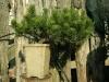 bonsaje-tropic-hukvaldy-3