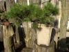 bonsaje-tropic-hukvaldy-5