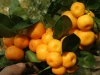 citrusy-hukvaldy