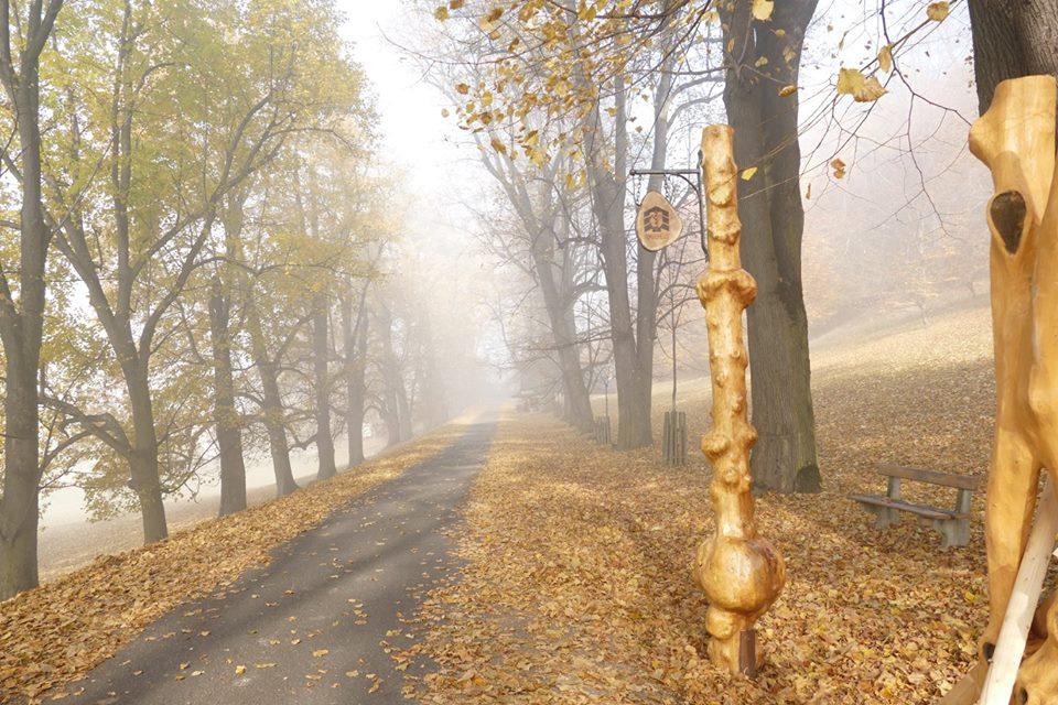 biskupské lesy Hukvaldy.jpg