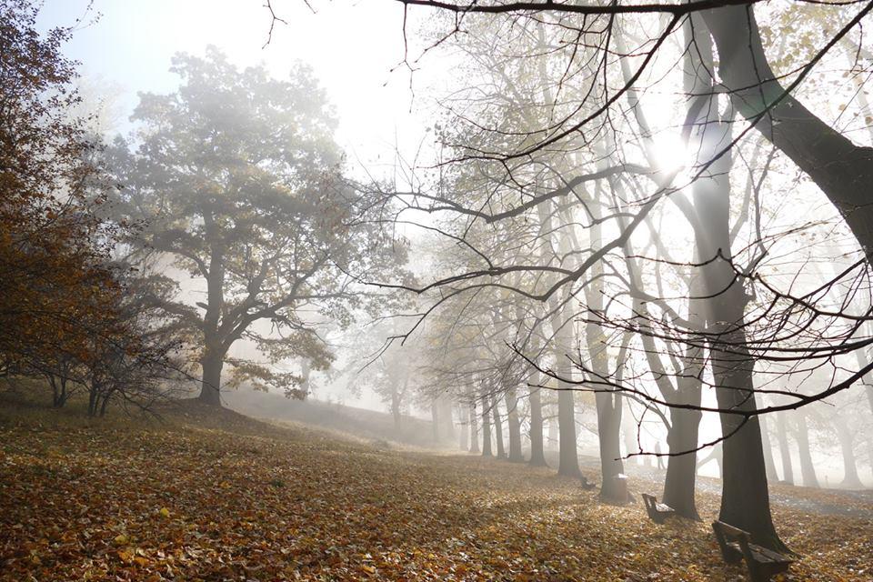 lesnictví Hukvaldy.jpg