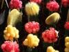 barevne-kaktusy