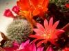 kaktusy-01