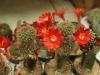kaktusy-hukvaldy