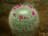 kaktusy-hukvaldy3