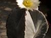 pestovani-kaktusu