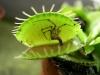 hmyz-masozravka