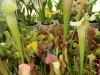 saracena-tropic-hukvaldy