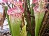 tropic-saracena