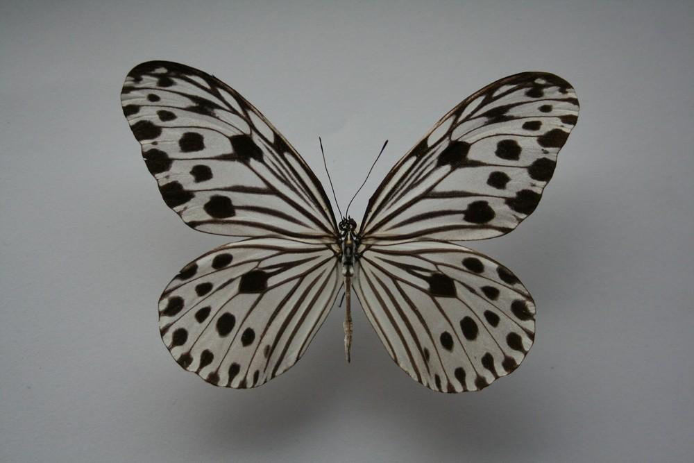 motyli-095