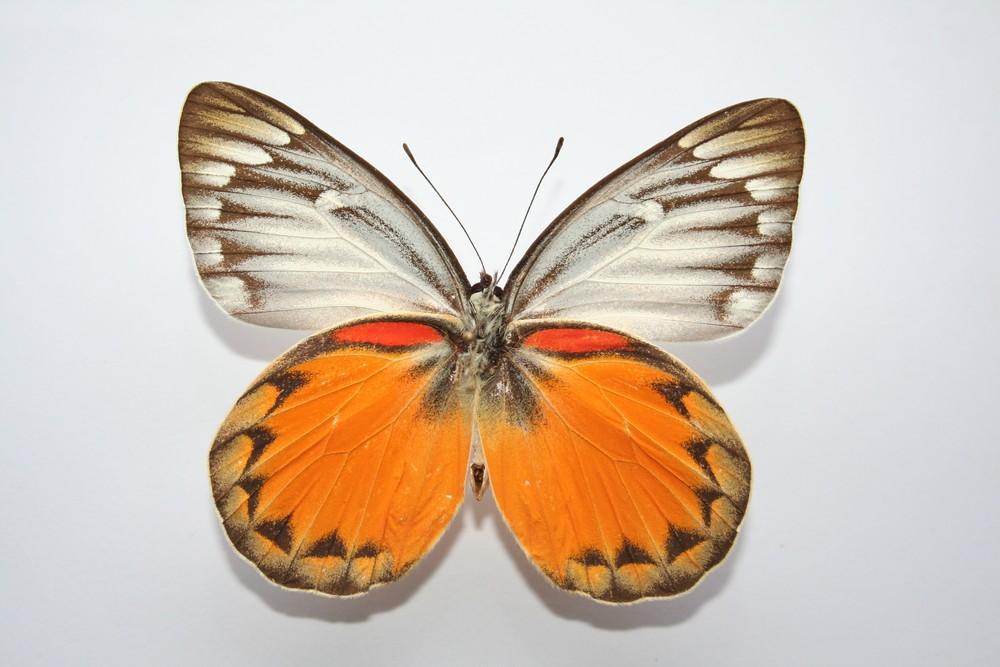 motyli-150