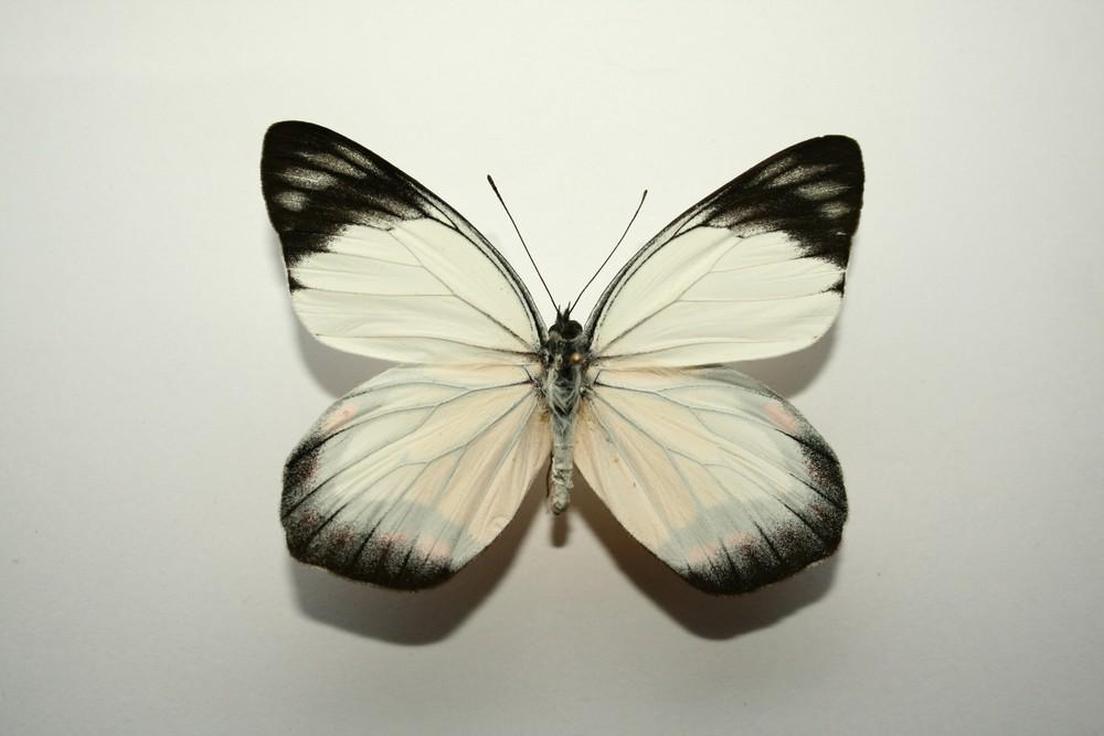 motyli-160
