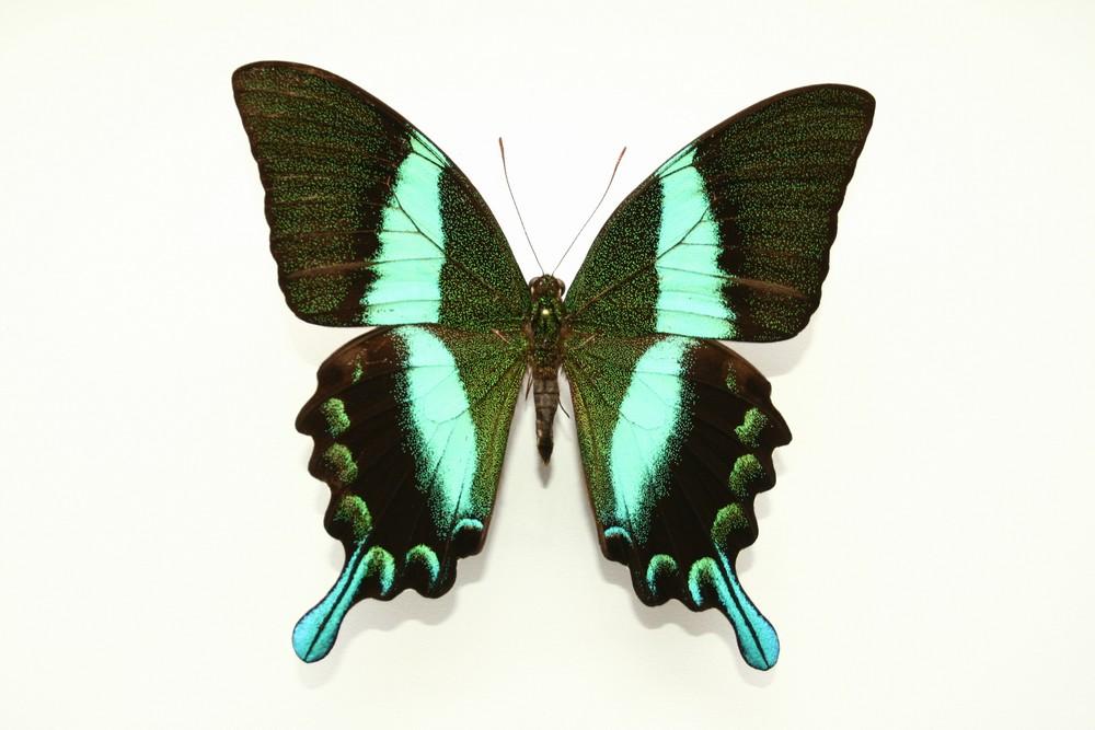 motyli-169