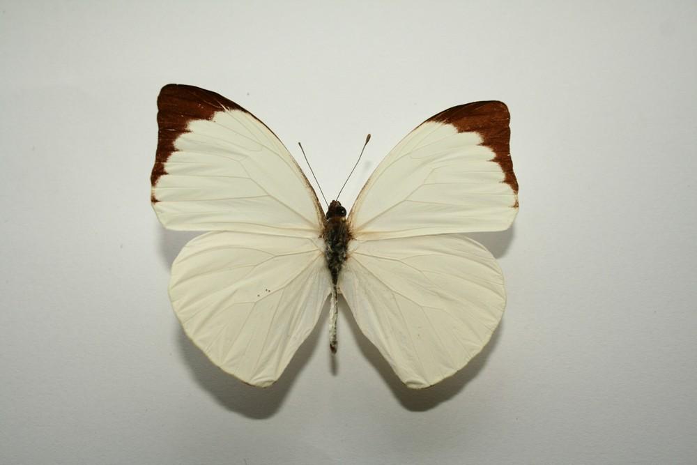 motyli-180
