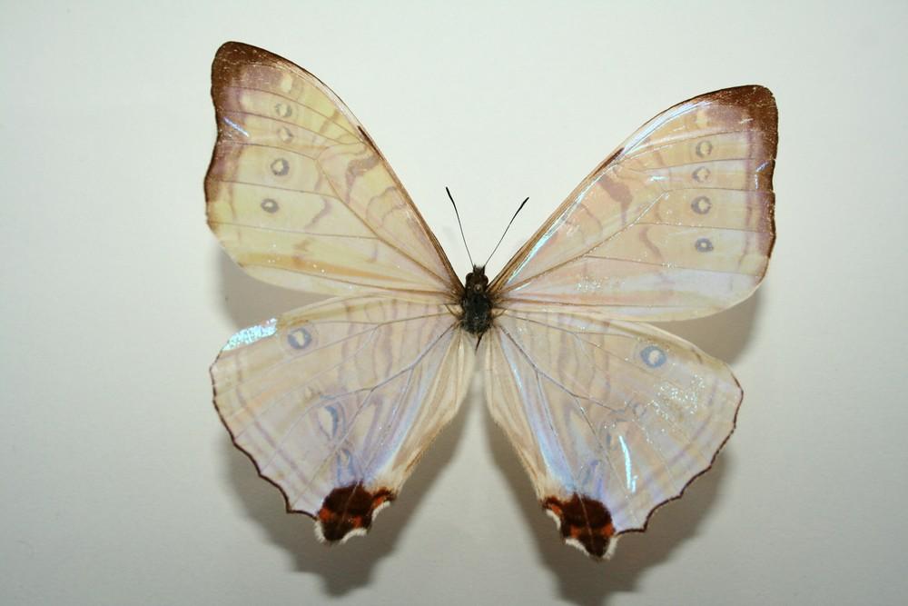 motyli-188