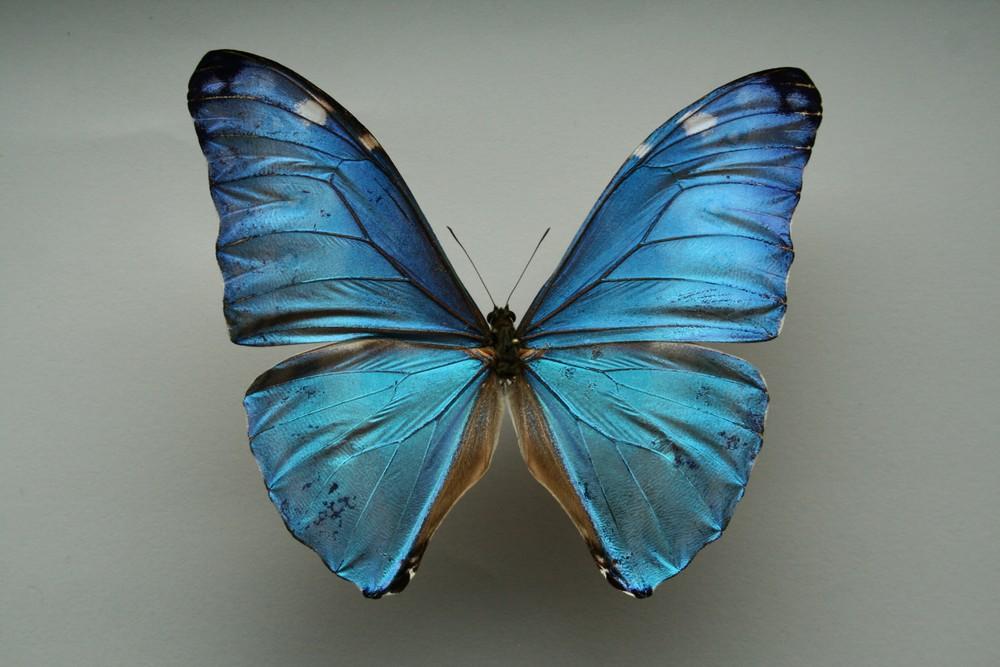 motyli-189