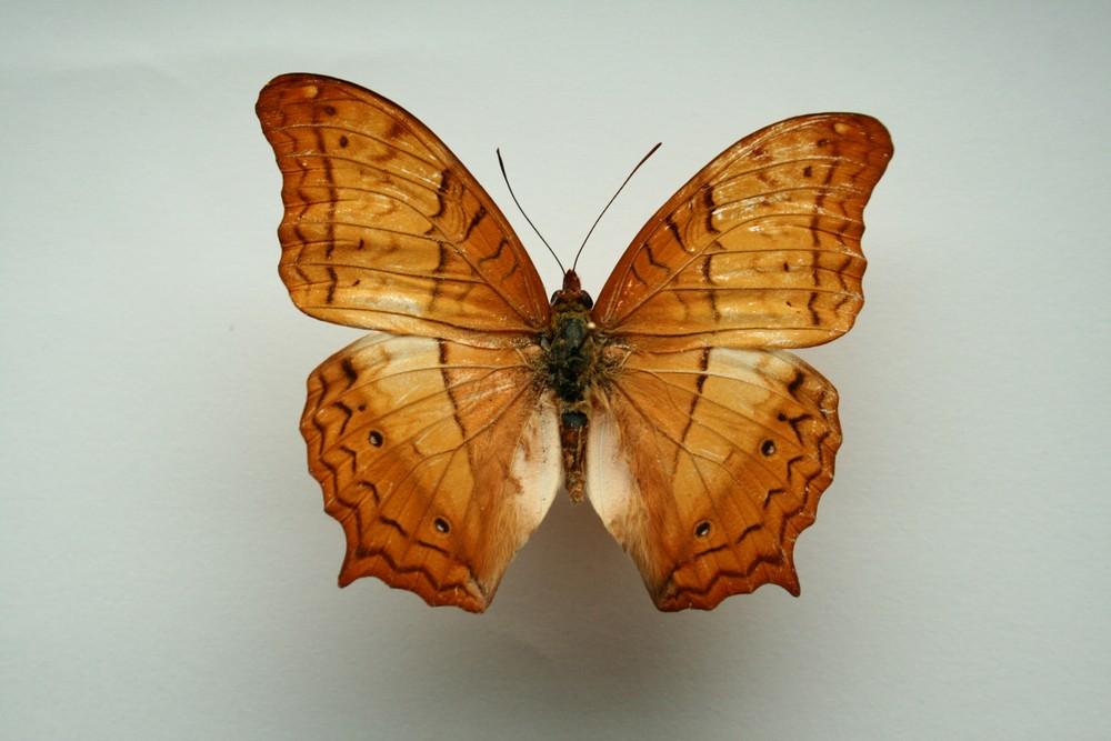 motyli-193