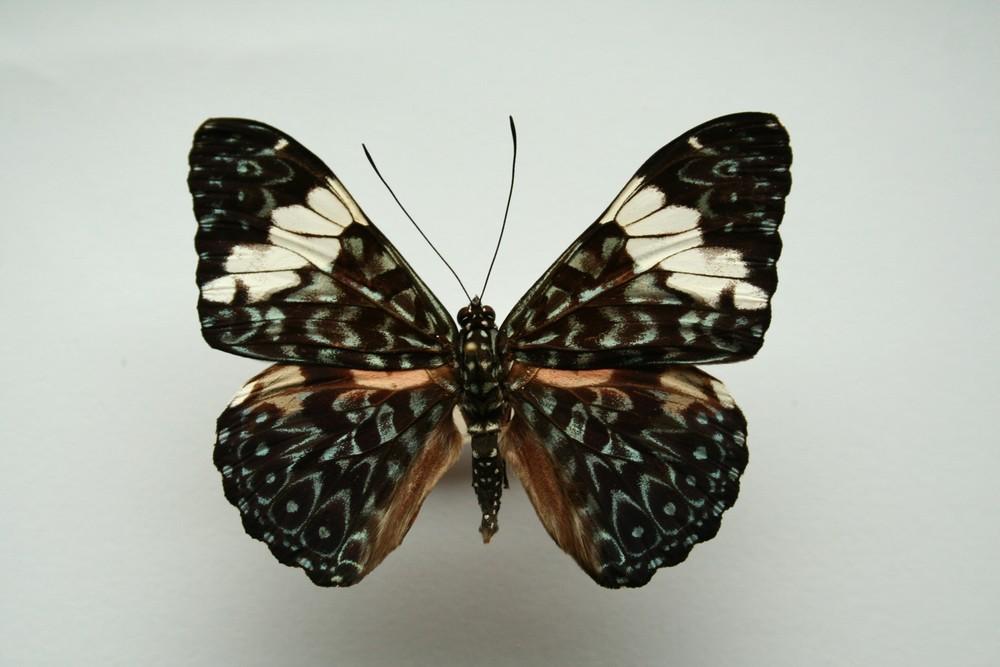 motyli-200