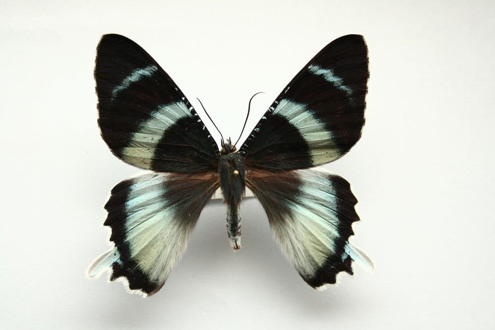 motyli-207