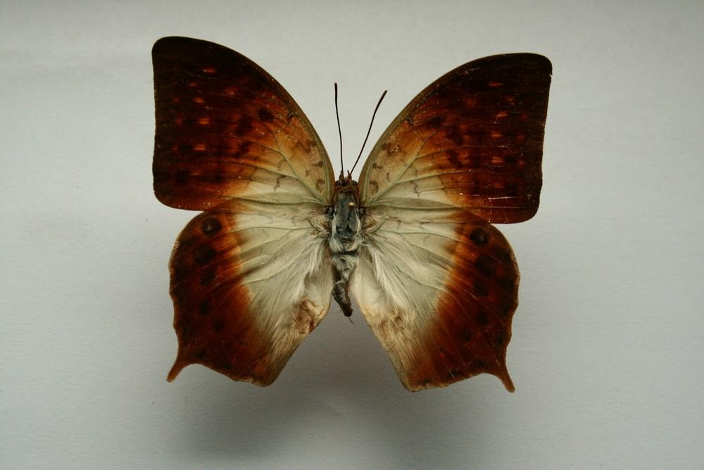 motyli-208