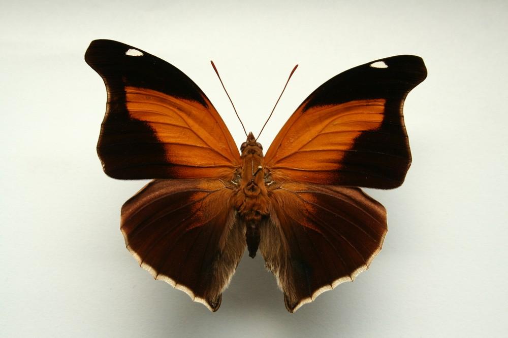 motyli-214