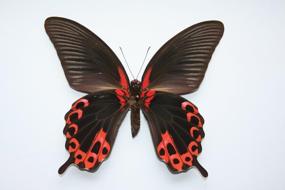 motyli-227