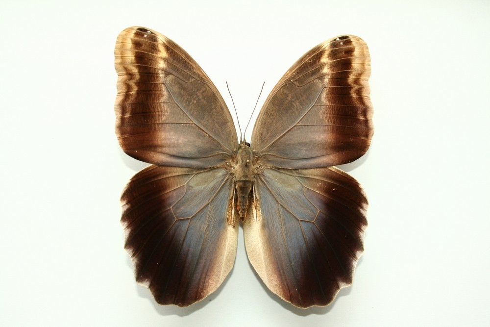 motyli-246