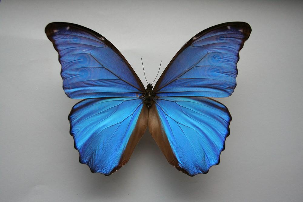 motyli-256