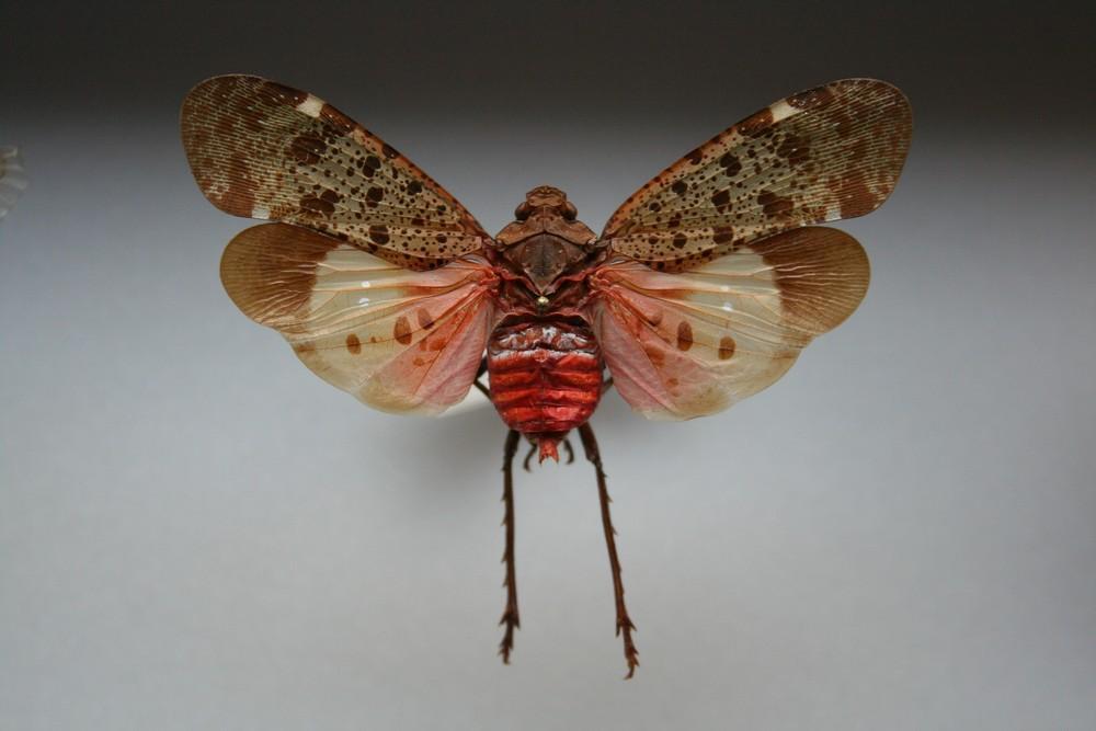 motyli-280