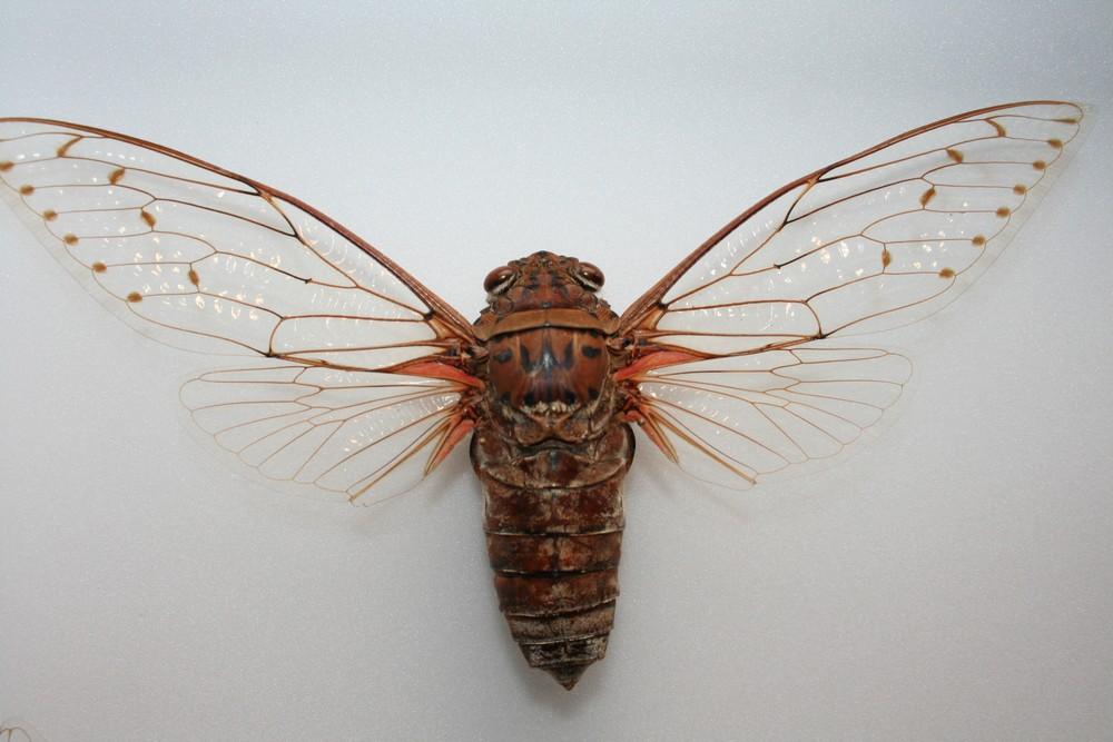 motyli-285