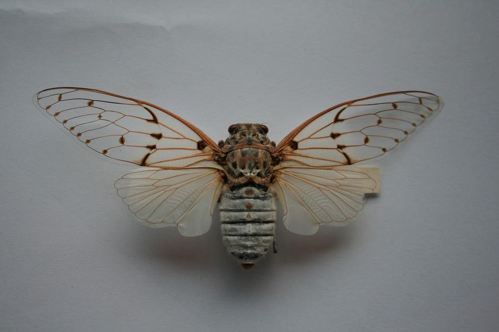 motyli-291
