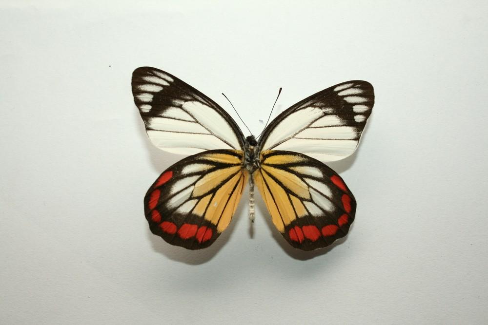 motyli-297