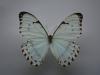 motyli-066