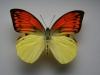 motyli-075