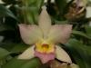 orchideje-1