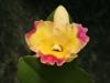 orchideje-16