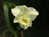 orchideje-19