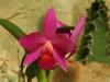 orchideje-2