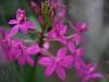 orchideje-21