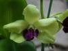 orchideje-23