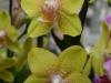 orchideje-24